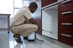 Pest Inspection, Pest Control in Catford, Hither Green, SE6. Call Now 020 8166 9746