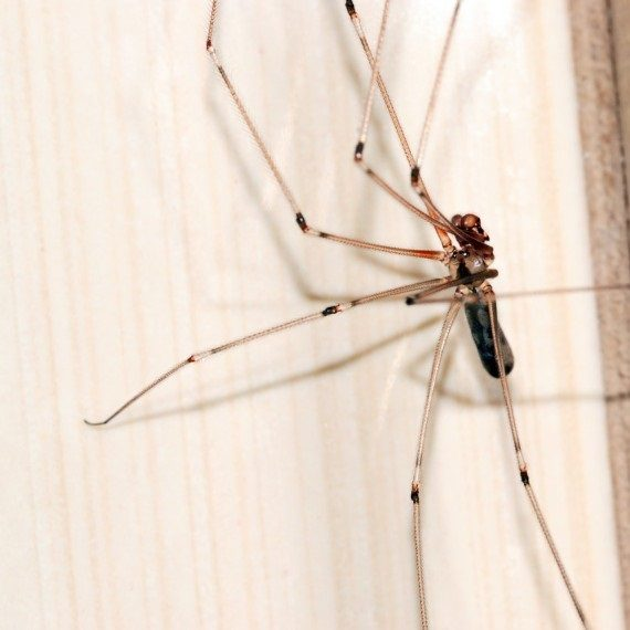 Spiders, Pest Control in Catford, Hither Green, SE6. Call Now! 020 8166 9746