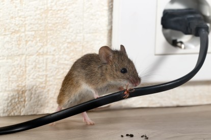 Pest Control in Catford, Hither Green, SE6. Call Now! 020 8166 9746