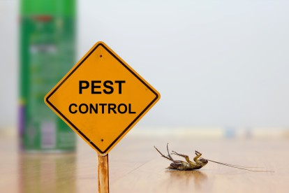 Pest Contol in Catford, Hither Green, SE6. Call Now 020 8166 9746
